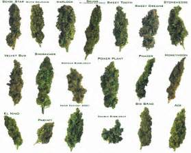 different ways to smoke marijuana picture 15