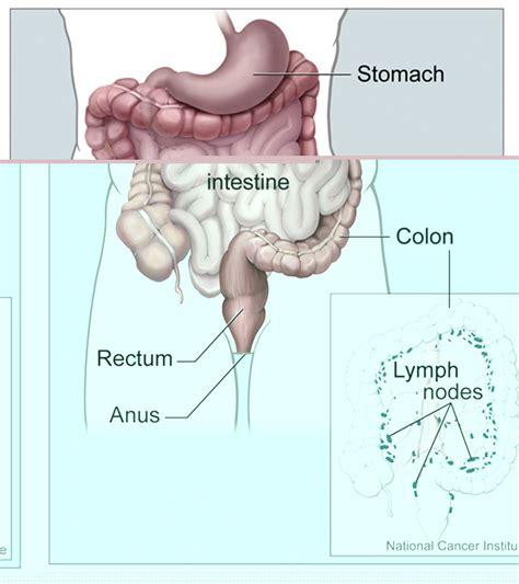 colon information picture 1