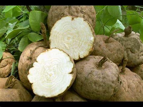 increase prolactin herbs picture 9