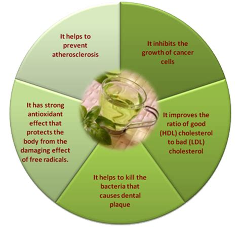 weight loss with green tea extract picture 6