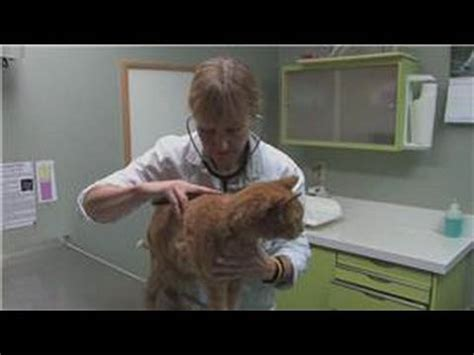 cat health liver picture 9