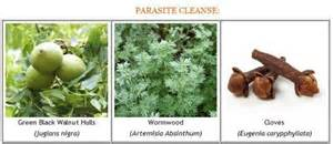 clinics in wellington who offers parasites cleanse picture 11