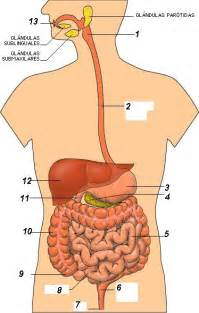 digestion picture 18