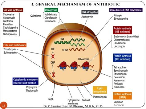 absorption of antibiotics by prostatitis picture 10