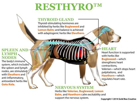 buy resthyro picture 18
