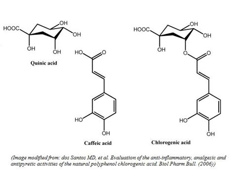 chlorogenic picture 17