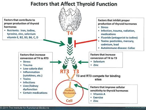 elevated thyroid levels picture 6