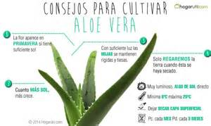 aloe and acne picture 10