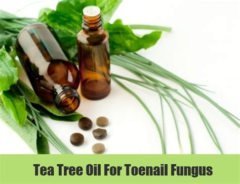 tea tree oil and nail fungus picture 6