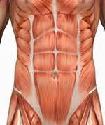 lower abdonimal muscle twitches picture 9