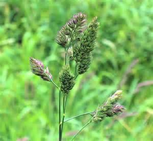 alfalfa prices picture 7