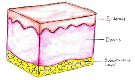 is rhodopsin located in skin cells picture 9