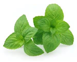 Peppermint Leaf picture 7