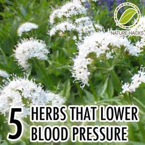 Herbals for lowering blood pressure picture 1
