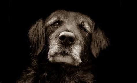aging dogs picture 9
