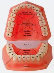 dental veneers for h picture 13