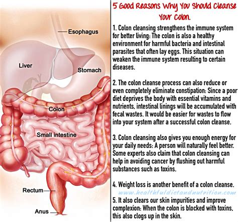 cleanse your colon picture 3