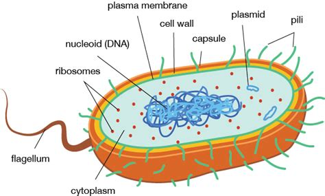 what is it when you have ongoing bacterial picture 4