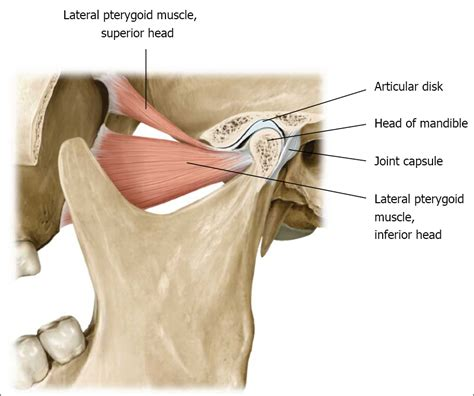 temperomandibular joint picture 7