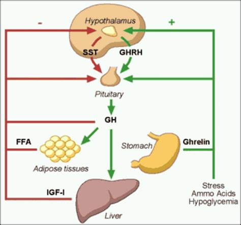 what is the very best hgh fda approved picture 2