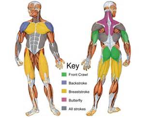 muscle groups picture 9