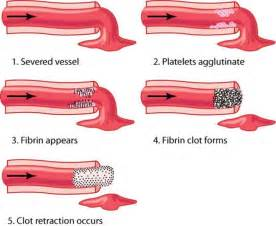 what is the process of fibrinolysis in liver picture 18