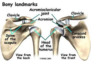 acromioclavicular joint picture 1