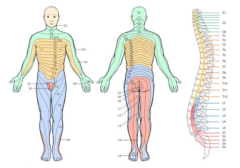 central nervous system injury skin rash picture 10