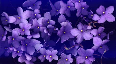violet picture 5