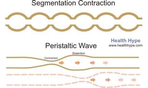 colon contractions picture 1
