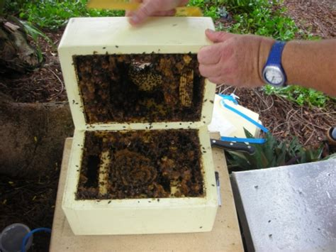 bee hives australia picture 9