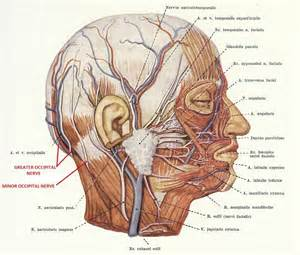 occipital neurectomy surgery picture 13