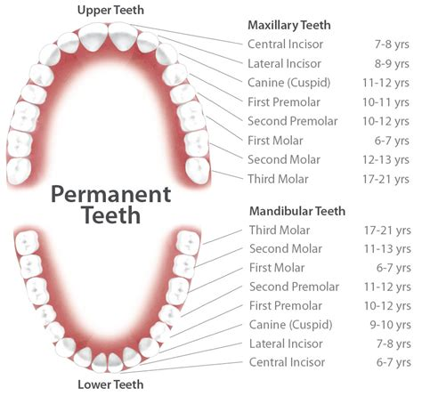 false teeth permanent picture 14