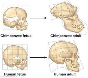human papillomavirus face picture 6