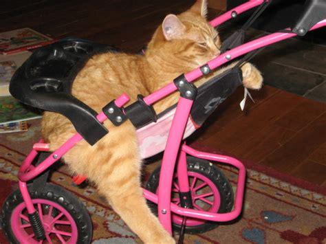cat herbal sedation picture 9
