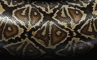 snake skin s picture 3