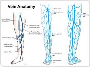 spiderlike veins under the skin picture 3