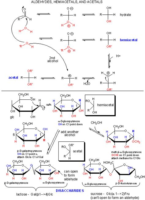 acid hydrolysis of starch picture 9
