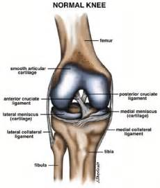 knee joint images picture 2
