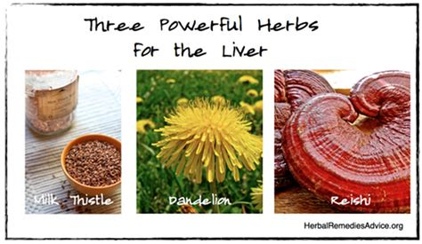 herb gallbladder cleanse picture 10