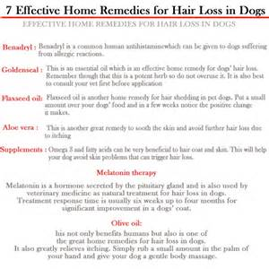 dog allergies cause hair loss picture 5