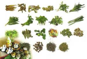 herbs to thin the blood in thialand picture 10