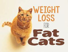 weight loss in cats picture 10