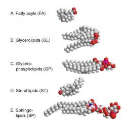 Lipids picture 1