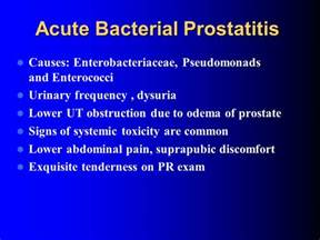 prostate bacterial normal picture 14