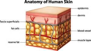 fatty tissue under the skin picture 13