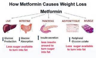 metformin and weight loss picture 1