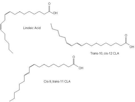 cis-9,trans-11 conjugated linoleic acid oprah picture 2