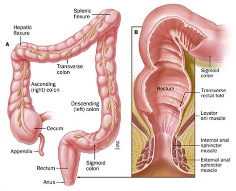 el movements after colon resection surgeruy picture 3