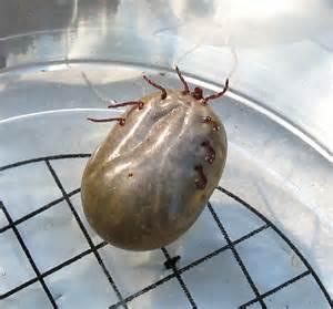 ticks in cellulite picture 10